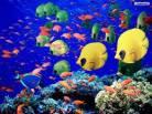 Ocean Life Preschool Theme