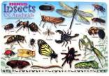 Bugs and Insects Preschool Theme