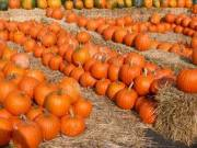 Pumpkin Preschool Theme
