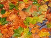 fall leaves theme