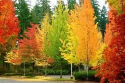 Fall (Autumn) Preschool Theme