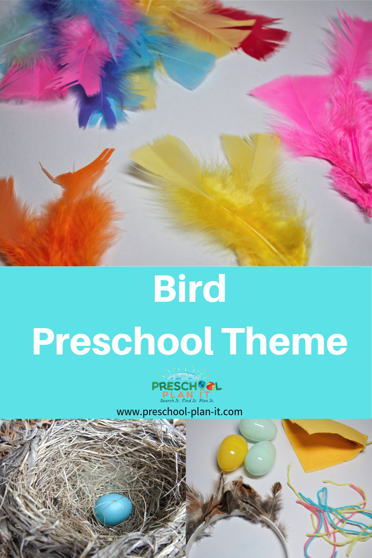 Bird Theme for Preschoolers