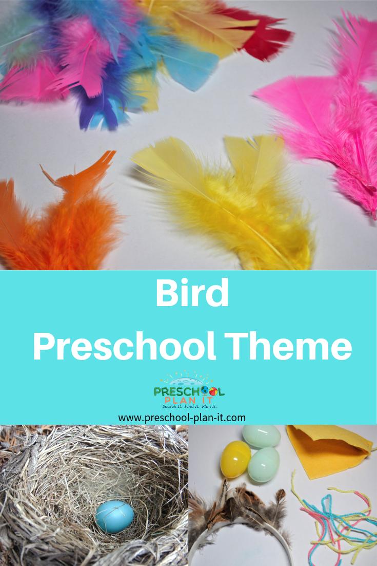 Bird Theme for Preschoolers