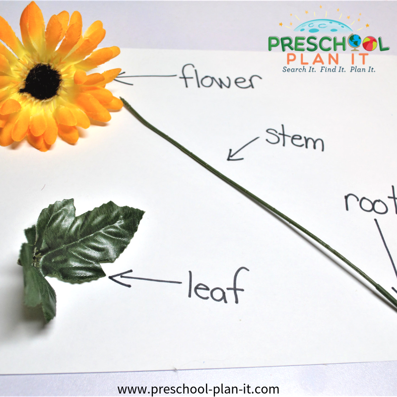 Parts of a Flower Circle Time Activity for a Growing Flowers Preschool Theme