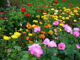 Growing Flowers Preschool Theme