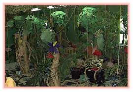 Rain Forest Layers on Spring Preschool Themes Lesson Plans