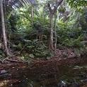 Rain Forest Preschool Theme