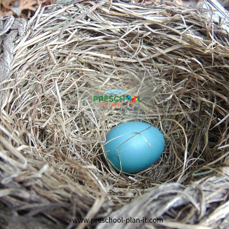 Exploring a Bird Nest for a Preschool Birds Theme