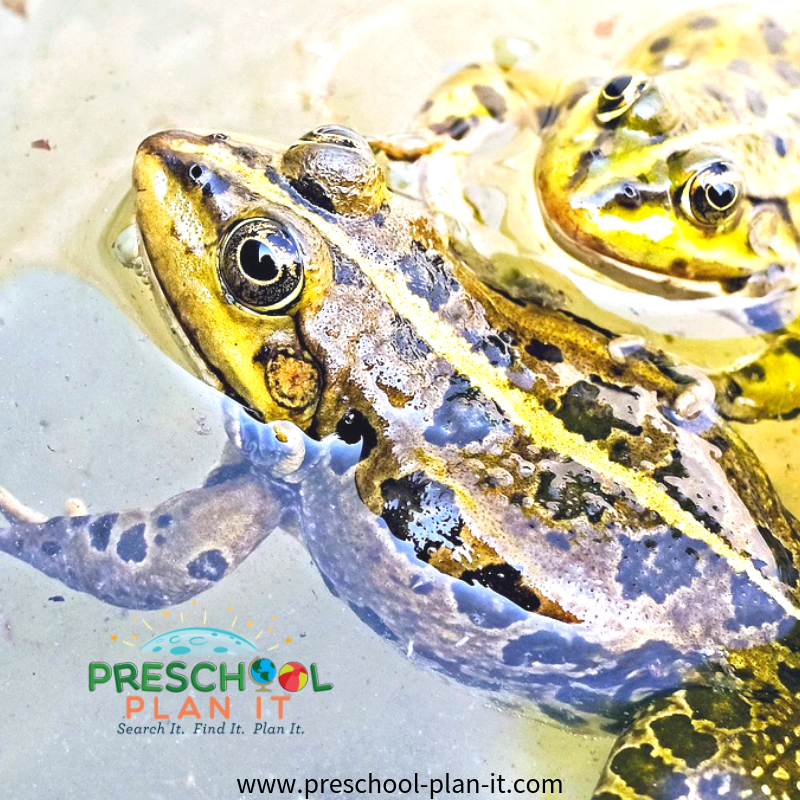 Frog Preschool Theme Field Trip Idea