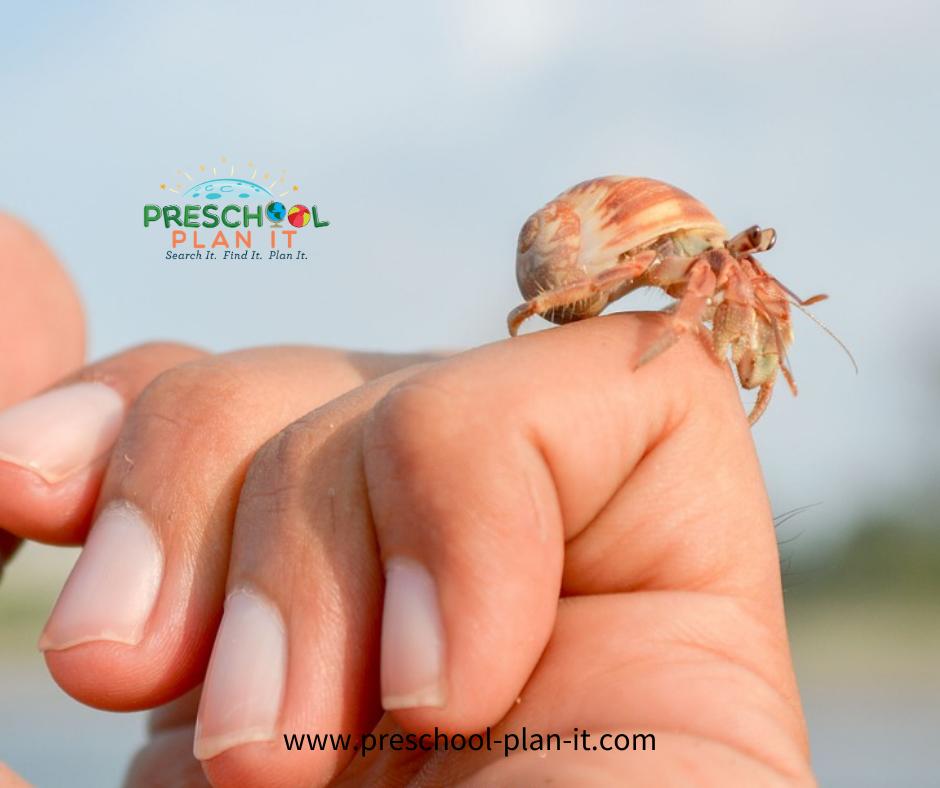 Hermit Crabs in Preschool