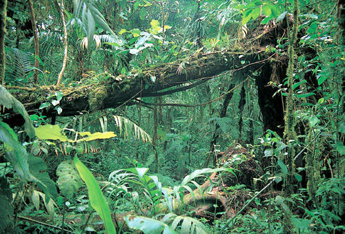 This Rain Forest Layer  The Understory  Is The Next Layer Up From The Forest  Floor. Here Youu0027ll Find Many Red Eyed Frogs, Bromeliad Plants, Spiders, ...